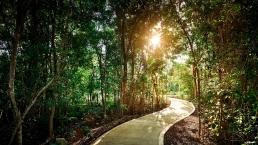 Ciclovia bosque