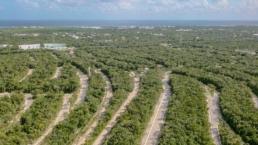 Area De Sendero Toma Aerea En Ciudad Mayakoba