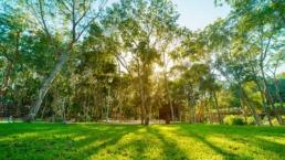 Parques En Senderos Areas Verdes En Ciudad Mayakoba